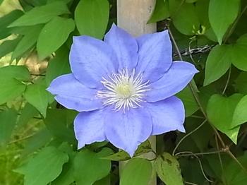 2011 05 09_0055.JPG