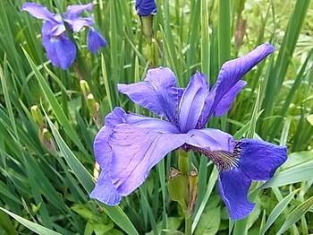 2011 05 09_0061.JPG